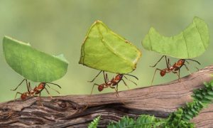 hormigas-trabajando