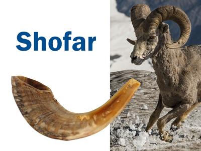 Los cuernos de carneros y de otros animales se han utilizado como trompetas (shofar en hebreo).