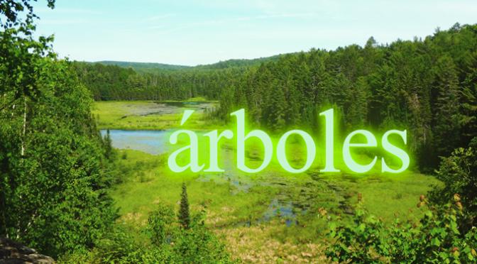 Descifrando Palabras Clave: Árboles